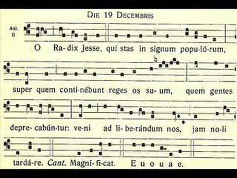 O Radix Jesse – O Root of Jesse – December 19