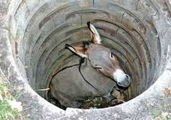 the parable of the donkey in the well