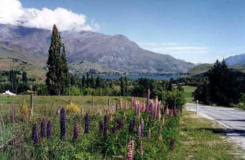 New Zealand Holiday